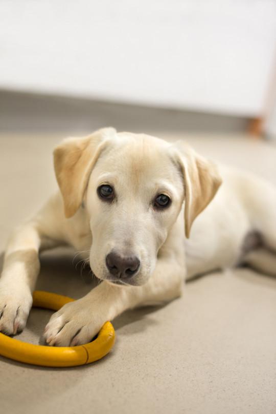 Fotografia de mascotas en elche francisco samper - fotografo alicante - fotografo elche